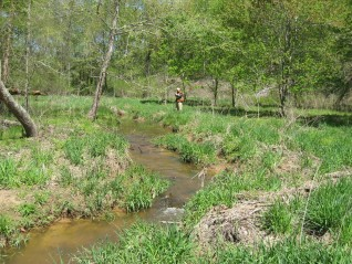 Conservancy-protected land on Popes Creek